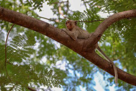 monkey smile sitting On the tree stump looking