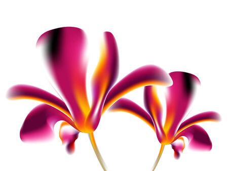 Colorful flower background vector illustration Vector
