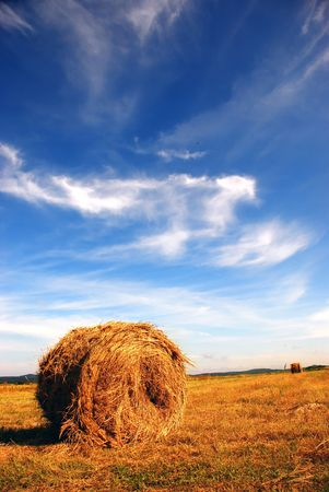 Straw bale on the field photo