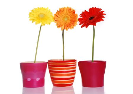 Colorful spring flowers in ceramic containers Фото со стока