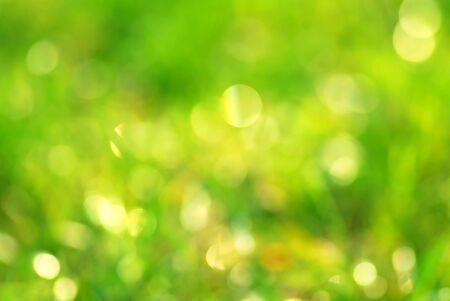 Green grass bokeh abstract light background  Stock Photo