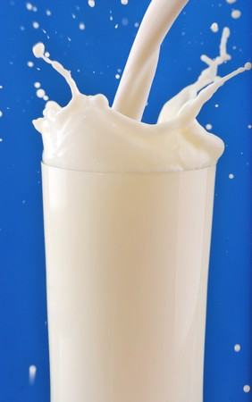 Milk splash isolated on blue backround photo
