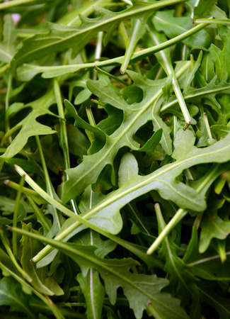 rucola: Fresh arugula  salad rocket  roquette  rucola leaves