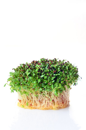 germinate: Sprouted alfalfa seeds on white background Stock Photo