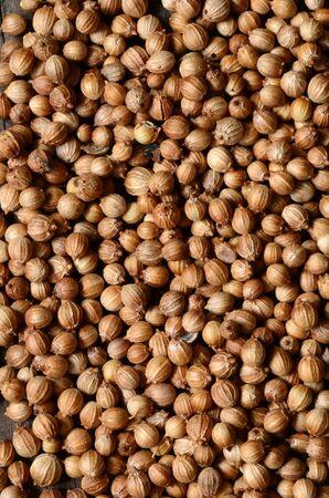 coriandrum sativum: Organic Dried coriander seeds (Coriandrum sativum) top view