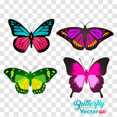 colorful Butterfly illustration vector collection, for you symbol, icon, brand and other users Stock Illustratie