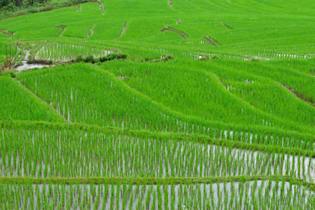 Green rice field in mountain at Chiangmai , Thailand  photo