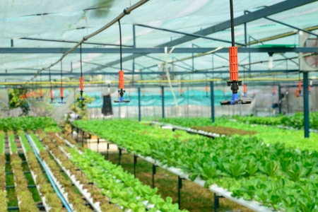 sprinkler irrigation in hydroponics vegetable farm photo