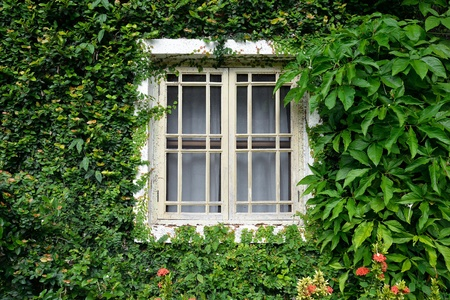 window covered with green ivy photo