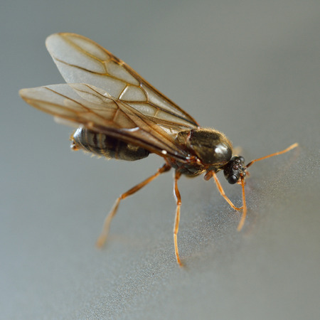 Little insect, termite white ant photo
