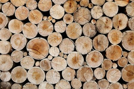 Pile of wood logs ready for industry photo