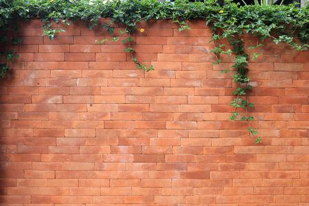 brick wall and green leaf ivy photo