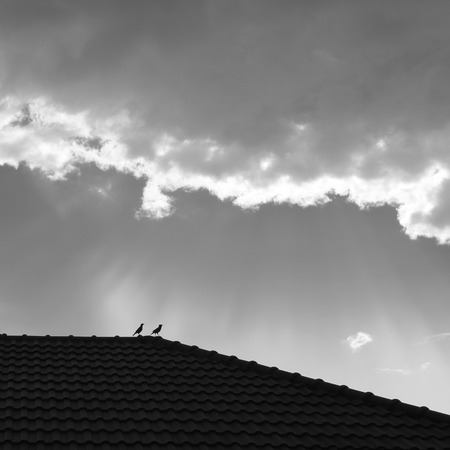 clound: bird on roof house with clound background