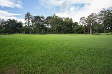 campo di erba verde nel parco Archivio Fotografico