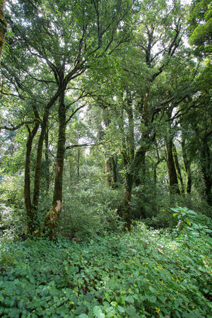 landscape of green jungle with tree rain forest photo