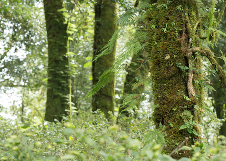green tree with moss and fern in rain forest photo