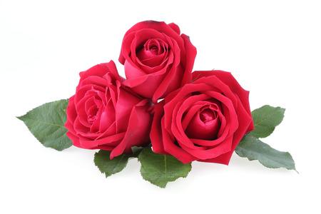 rosas blancas: rosa roja sobre fondo blanco Foto de archivo