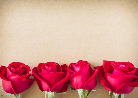rosas rojas: flor rosa roja en la p�gina de papel en blanco para el texto del mensaje creativo aqu� Foto de archivo