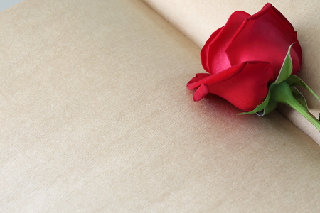 message text: red rose flower on blank paper page for creative your message text here