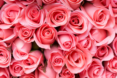 anniversary flower: pink rose flower bouquet background Stock Photo