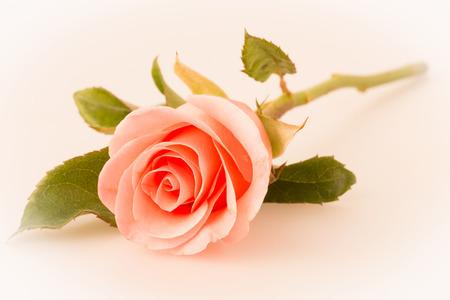 rose flower bouquet vintage background Stock Photo - 35695233