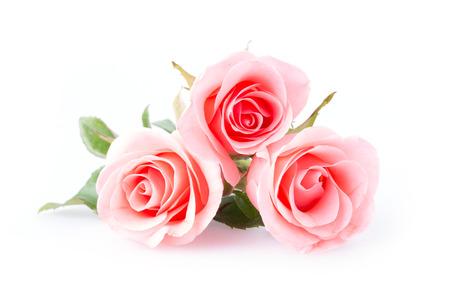 白地にピンクのバラの花 写真素材 - 36012618