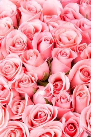 pink rose flower bouquet background 写真素材
