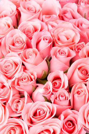 pink rose flower bouquet background Stock Photo