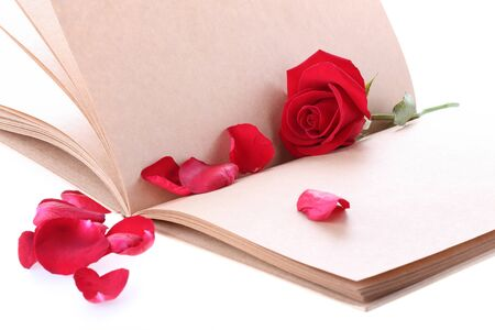 red rose flower on blank paper page for creative your message text here photo