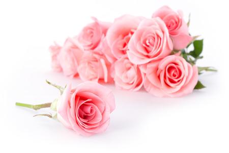 rosa Rose Blume auf weißem Hintergrund