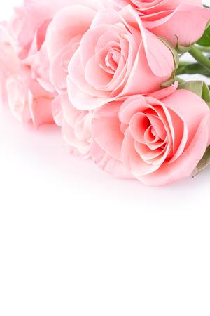 roze roze bloem op een witte achtergrond