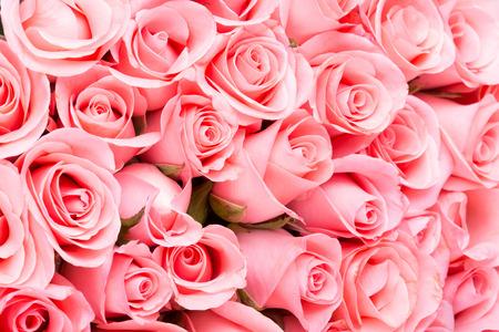 핑크 꽃 꽃다발 장미 배경