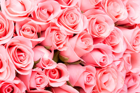 roses petals: pink rose flower bouquet background Stock Photo