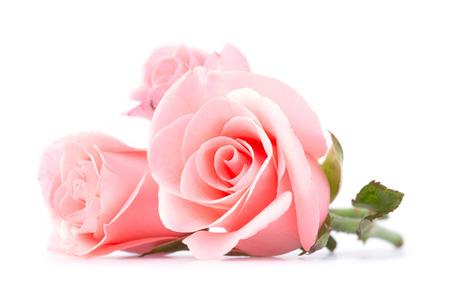Fiore rosa rosa su sfondo bianco Archivio Fotografico - 39501788