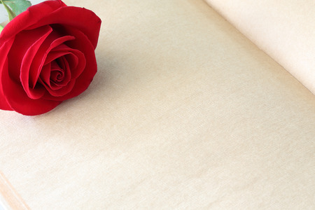 day book: red rose flower on blank paper page for creative your message text here