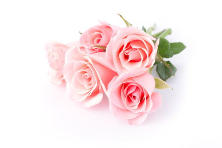 five background: pink rose flower on white background