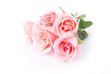 rosa: rosa Rose Blume auf weißem Hintergrund Lizenzfreie Bilder