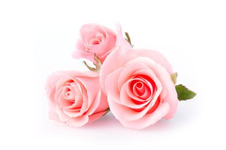 Fiore rosa rosa su sfondo bianco Archivio Fotografico - 40782337