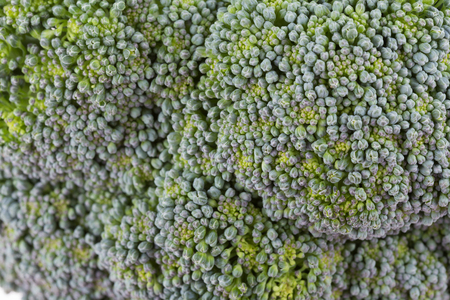 plant antioxidants: green broccoli organic vegetable, close up image