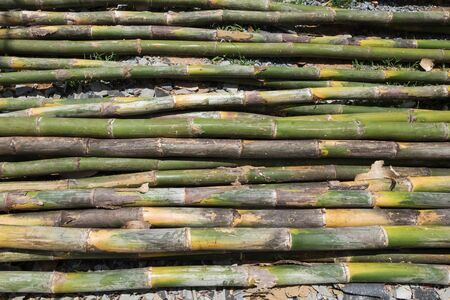 bamboo stick: pile of bamboo stick prepare for material of construction