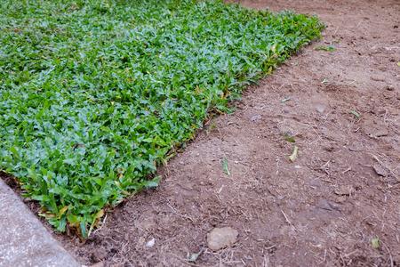 turf pile: backyard, yard work planting a new sod grass in garden