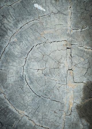 annual ring annual ring: annual ring wood crack damage texture background