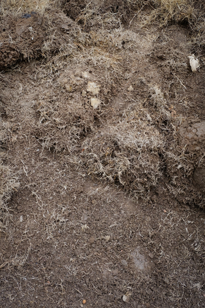 yard work: yard work, preparation soil in garden with dry grass Stock Photo