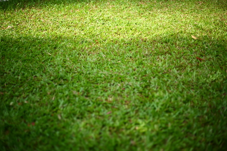 green sod grass turf for playground and sport field area
