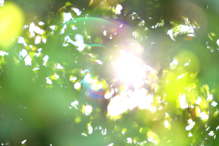 abstract blur beautiful sun light shiny in the morning with green bokeh defocused nature summer background Stock Photo