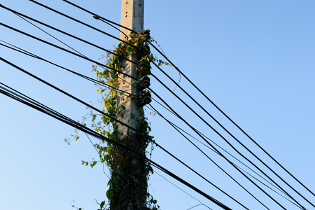 green vine plants on electric pole