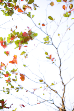 abstract blur autumn background, leaf falling on branch tree