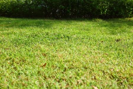 green grass turf in garden