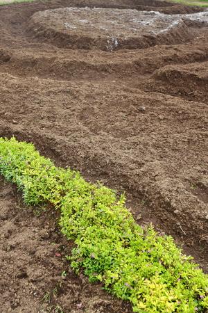 preparing soil for planting plant in landscaping garden