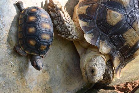 turtle animal of long life in wildlife Archivio Fotografico